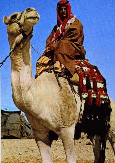 joe alon center the museum of bedouin culture